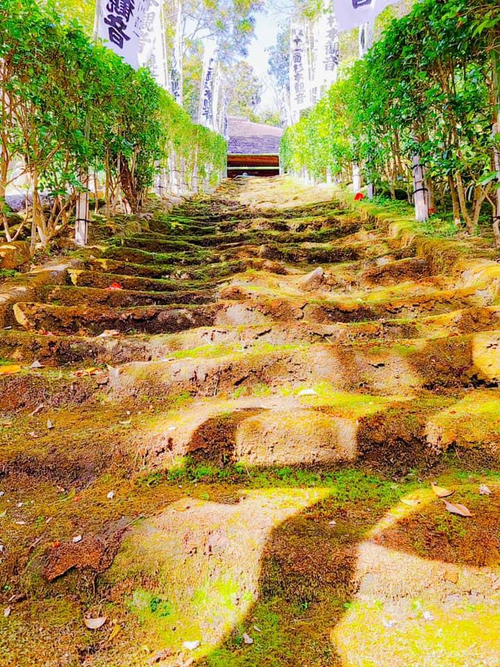 杉本寺苔階段写真